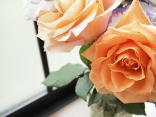 花の写真素材 [FYI00202679]