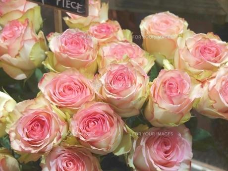 パリの花屋の店先で見つけたフレンチローズの素材 [FYI00202744]