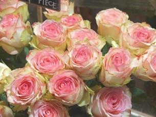 パリの花屋の店先で見つけたフレンチローズの写真素材 [FYI00202744]