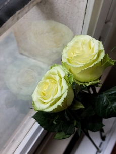 淡いグリーンとクリームホワイトのフレンチローズ 2の写真素材 [FYI00202752]