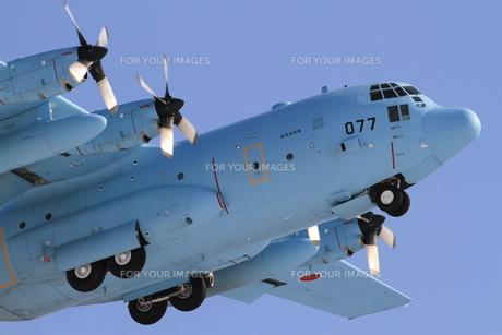 ロッキード C-130 ハーキュリーズの写真素材 [FYI00202839]