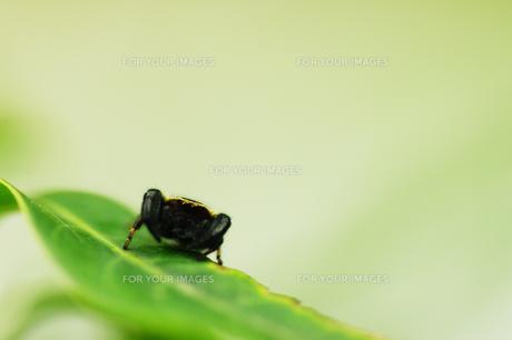 クモの写真素材 [FYI00202842]