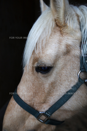 馬の素材 [FYI00202976]