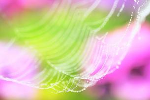 滴の揺りかごの写真素材 [FYI00203065]