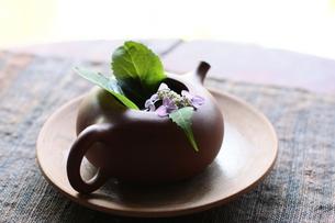 紫陽花とお茶の写真素材 [FYI00203067]