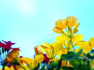 Yellow&SKYの写真素材 [FYI00203091]