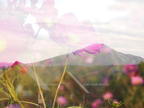 鳥海山とコスモスの素材 [FYI00203248]