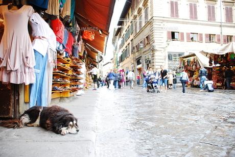 洋服屋の前で寝そべる犬の写真素材 [FYI00203350]
