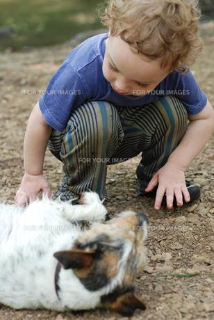 寝転がる犬と男の子の写真素材 [FYI00203361]