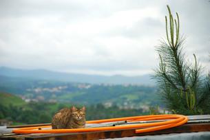 屋根の上の猫の写真素材 [FYI00203374]