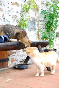 キスする猫の写真素材 [FYI00203437]