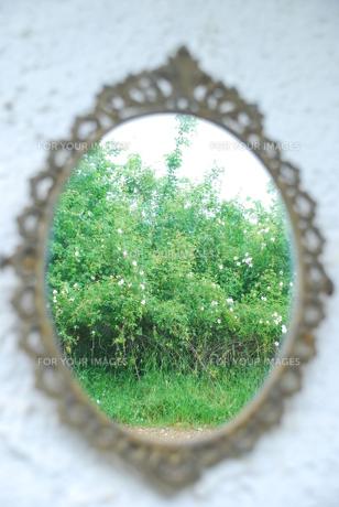 鏡の中の自然の写真素材 [FYI00203460]