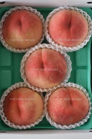 桃の写真素材 [FYI00203602]