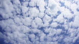 夏の壮快な うろこ雲 の写真素材 [FYI00203662]