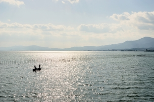 琵琶湖のエリ漁業の素材 [FYI00203831]