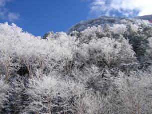 樹氷と青空の写真素材 [FYI00203875]