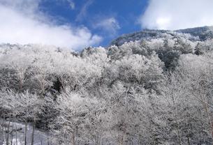 樹氷林の写真素材 [FYI00203892]