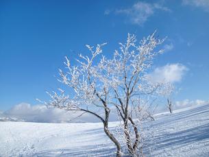 青空と樹氷の写真素材 [FYI00203940]