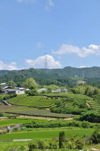 和束の茶畑の写真素材 [FYI00204041]