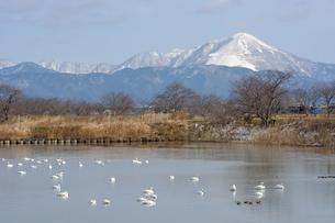 琵琶湖岸から見る伊吹山の素材 [FYI00204402]