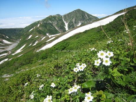 夏の立山連峰の素材 [FYI00204462]
