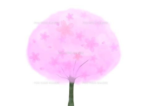 桜の木の写真素材 [FYI00204700]