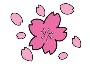 桜の花と花びらの写真素材 [FYI00205270]