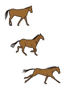 馬走るの写真素材 [FYI00205318]