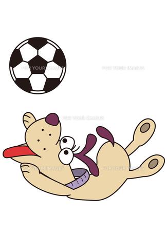 犬とサッカーボールの素材 [FYI00205459]