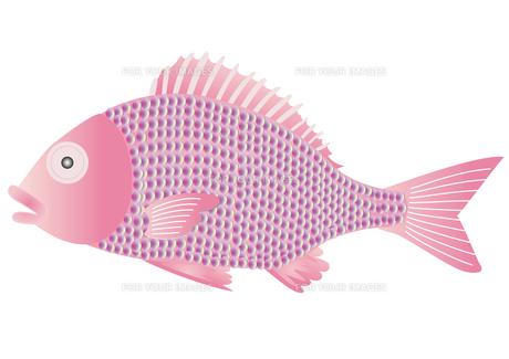 鯛の写真素材 [FYI00205504]