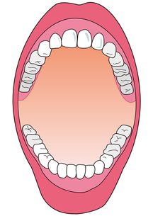 歯の検診の素材 [FYI00205557]
