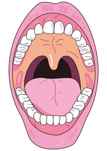 口の中の写真素材 [FYI00205639]