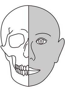 人体顔面構造図の写真素材 [FYI00205643]
