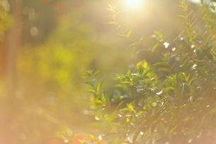 光の中の緑の写真素材 [FYI00205776]