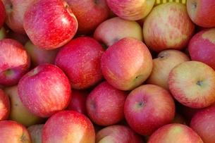 りんごの写真素材 [FYI00205791]