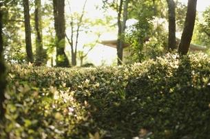 光の中の緑の写真素材 [FYI00205794]