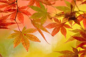 秋の彩りの写真素材 [FYI00206090]