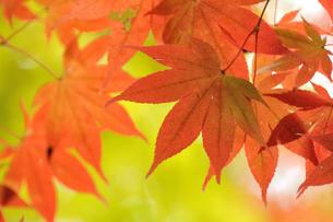 秋のコントラストの写真素材 [FYI00206106]