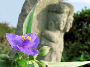 ムラサキツユクサと道祖神の写真素材 [FYI00206118]