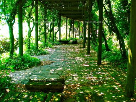 緑の散歩道の写真素材 [FYI00206221]