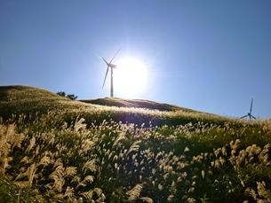すすきと風と太陽の写真素材 [FYI00206227]