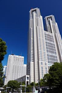東京都庁第一本庁舎の写真素材 [FYI00206243]