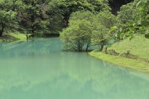 エメラルド色の湖水の写真素材 [FYI00206583]