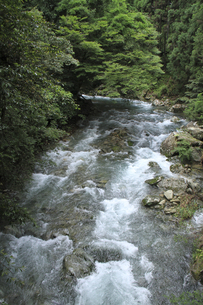 添野川の流れの写真素材 [FYI00206601]