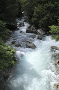 夏の平井川渓谷の写真素材 [FYI00206607]