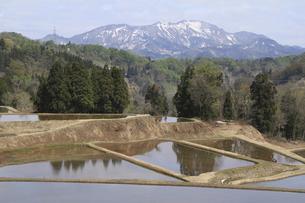 残雪の山と田んぼの写真素材 [FYI00206613]