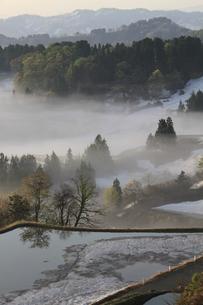 朝霧の棚田の写真素材 [FYI00206624]
