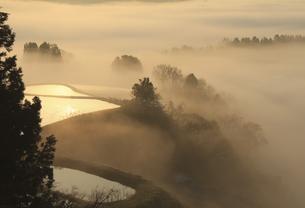 朝霧の棚田の写真素材 [FYI00206632]