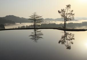 田んぼと木立の写真素材 [FYI00206637]