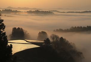 朝霧の棚田の写真素材 [FYI00206643]
